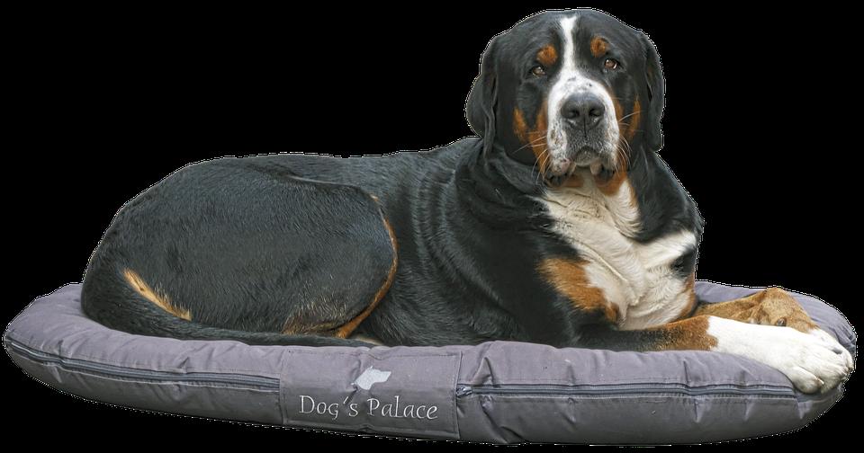 dog-2842905_960_720