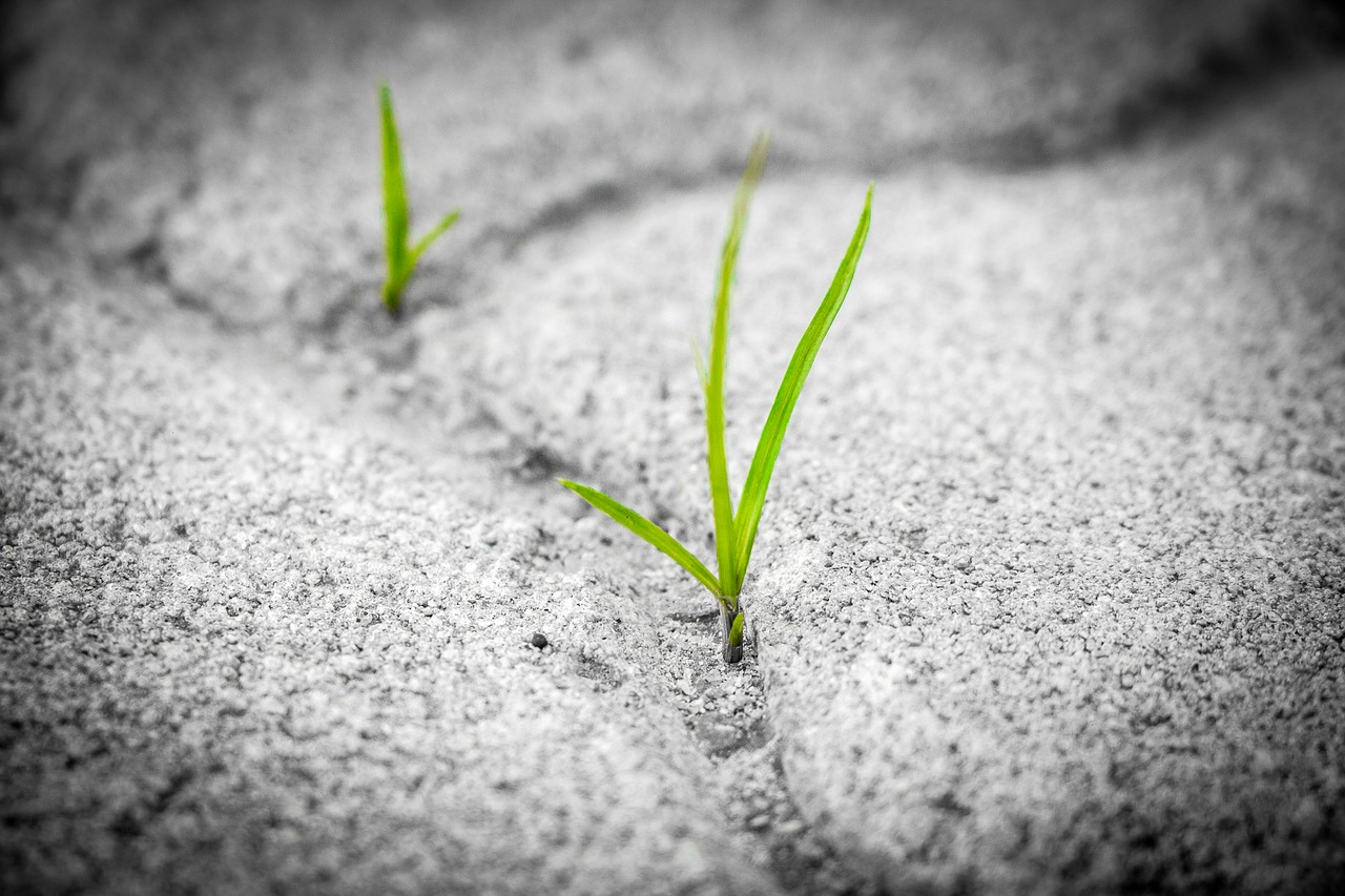 grass seed to grow