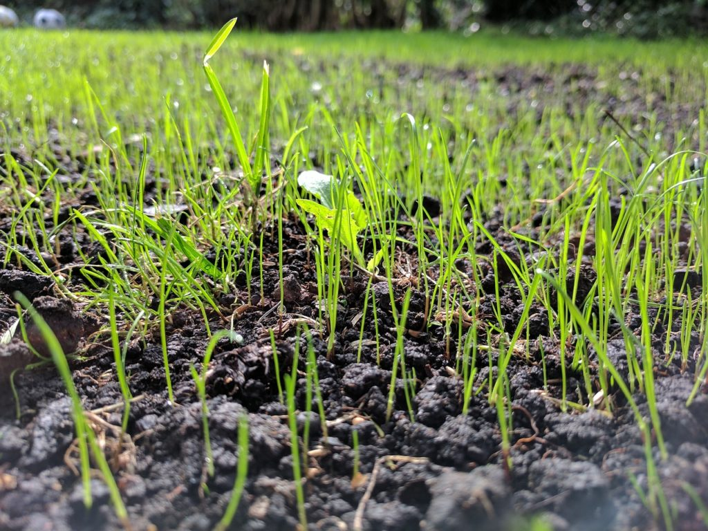 how to plant grass seeds on hard dirt