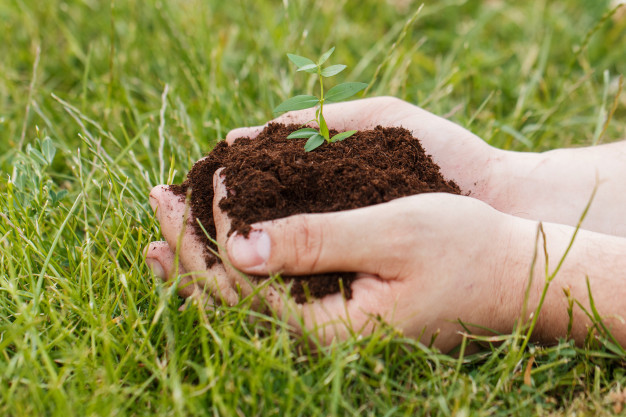 plant grass seed