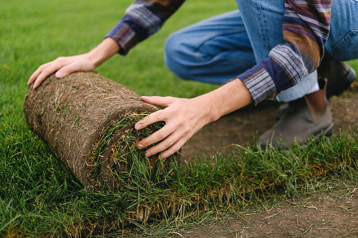 tips on how to plant grass seed on hard dirt