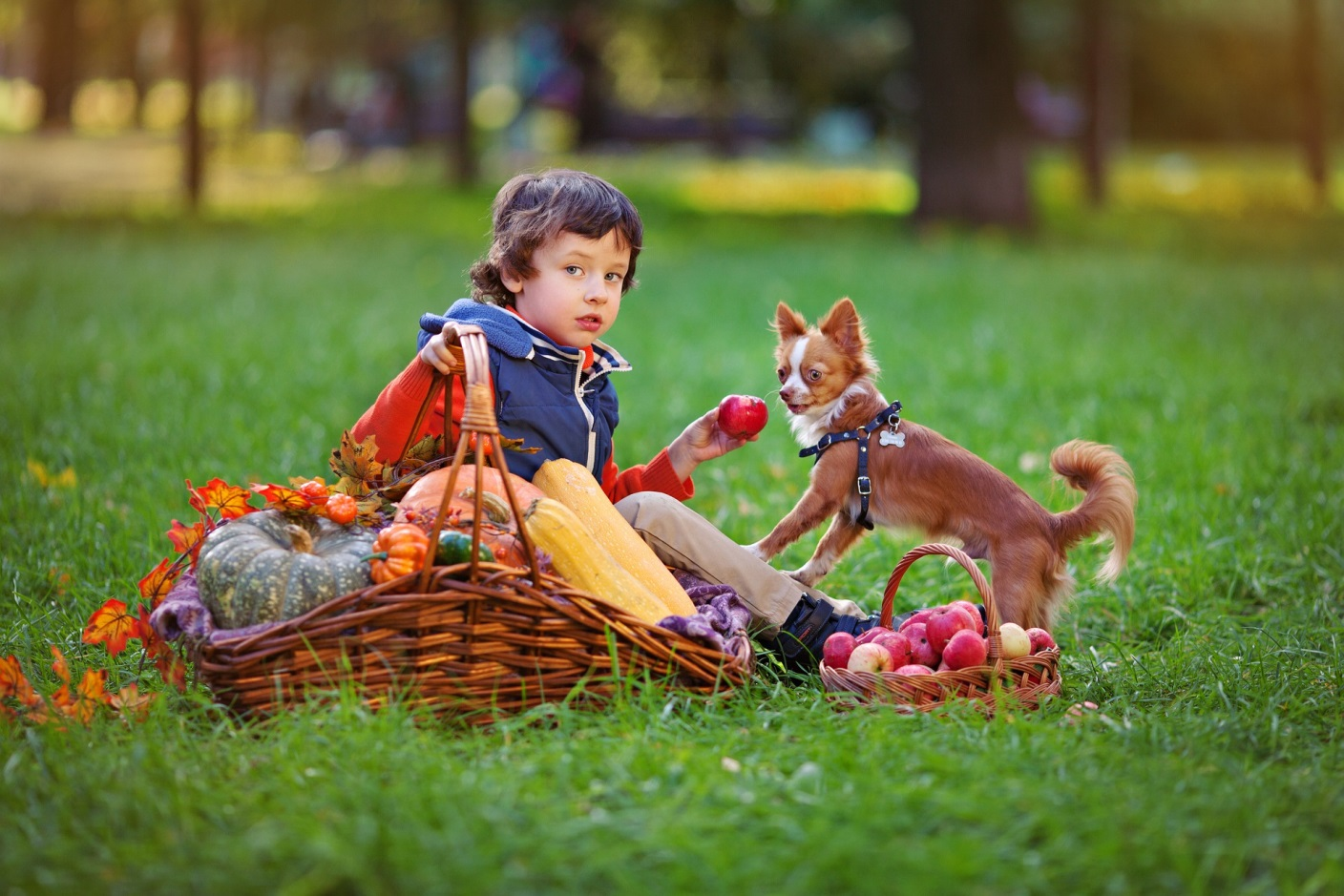 Why Your Child Needs a Dog