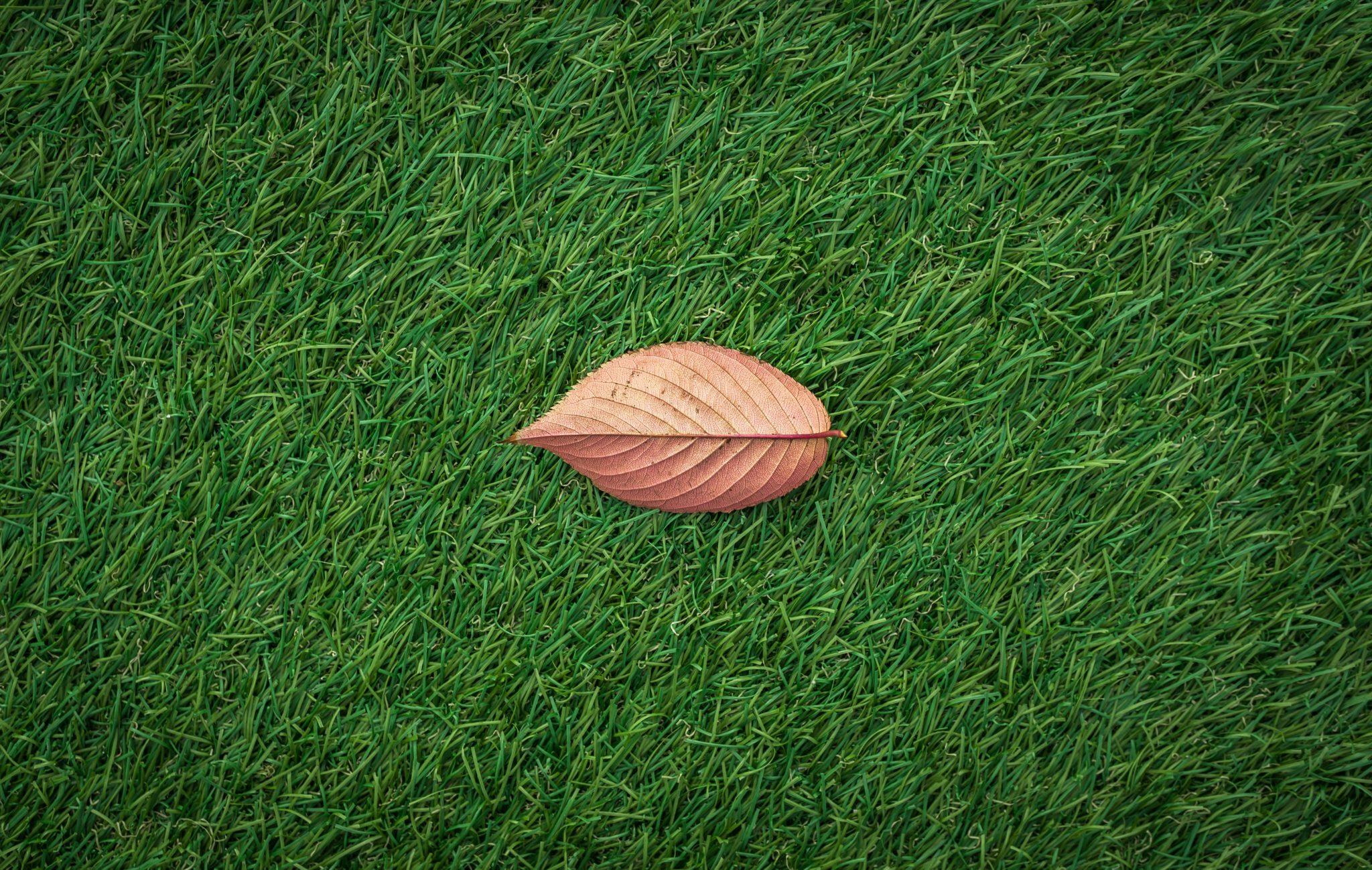 leaves-1822976