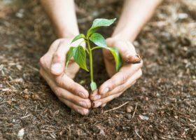 Save Garden