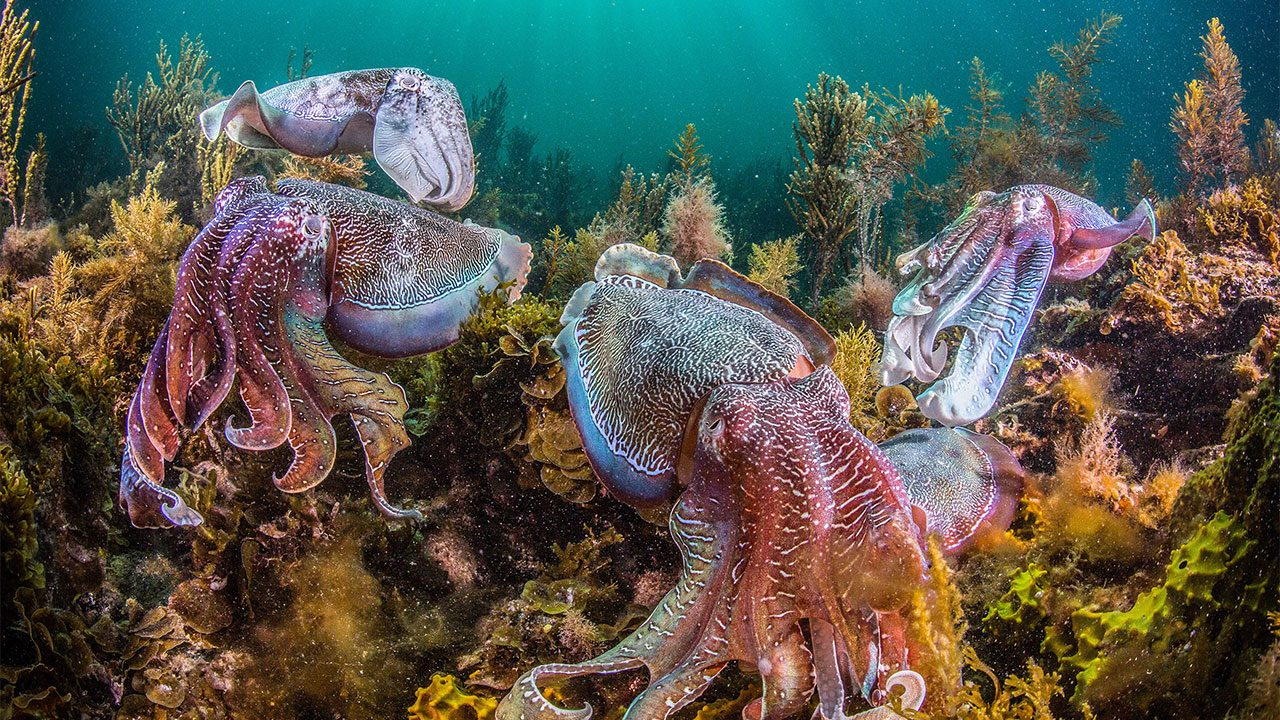 squid and octopuses move