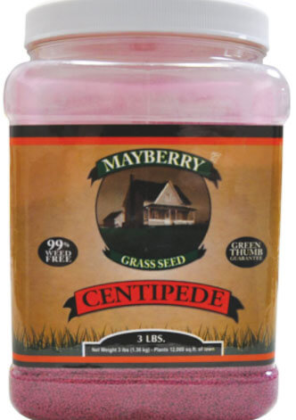 Mayberry grass seed