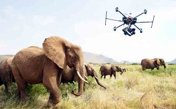 Monitoring wildlife drone