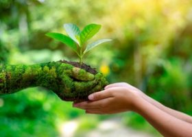 You Need to Care for Environment
