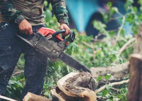 Business Insurance Covering Tree Trimmers