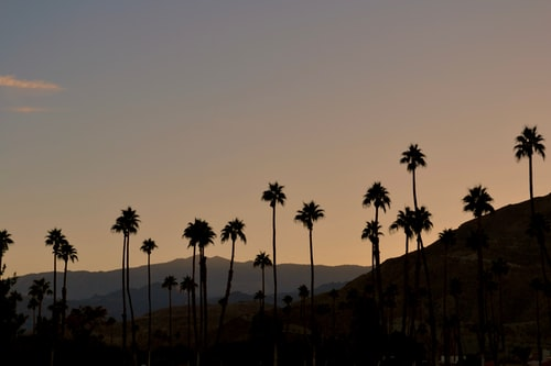 The best areas in Palm Springs, FL to find luxury condos