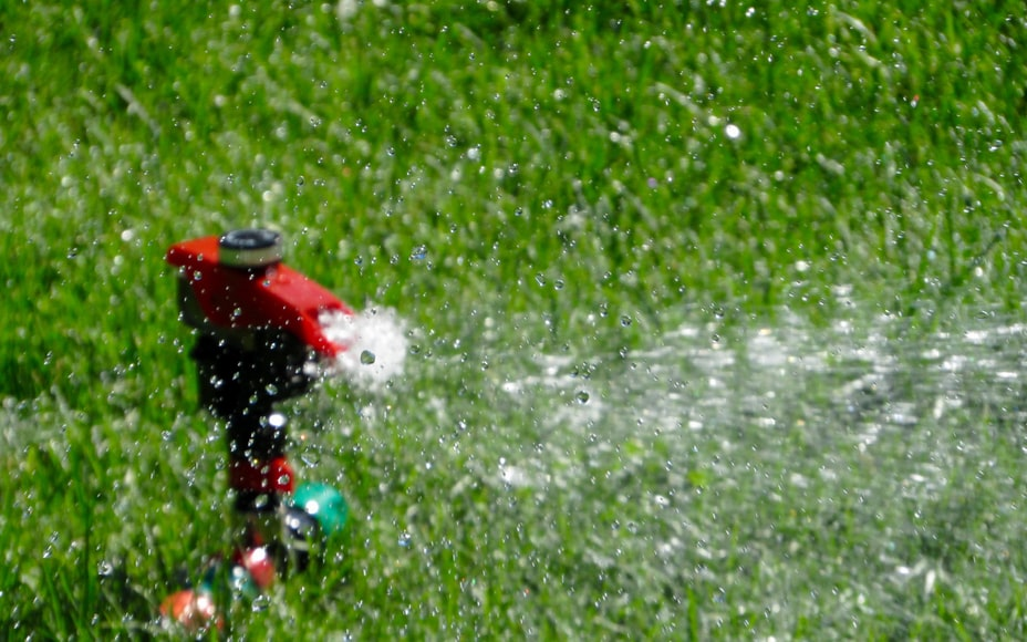 2. Water And Fertilize